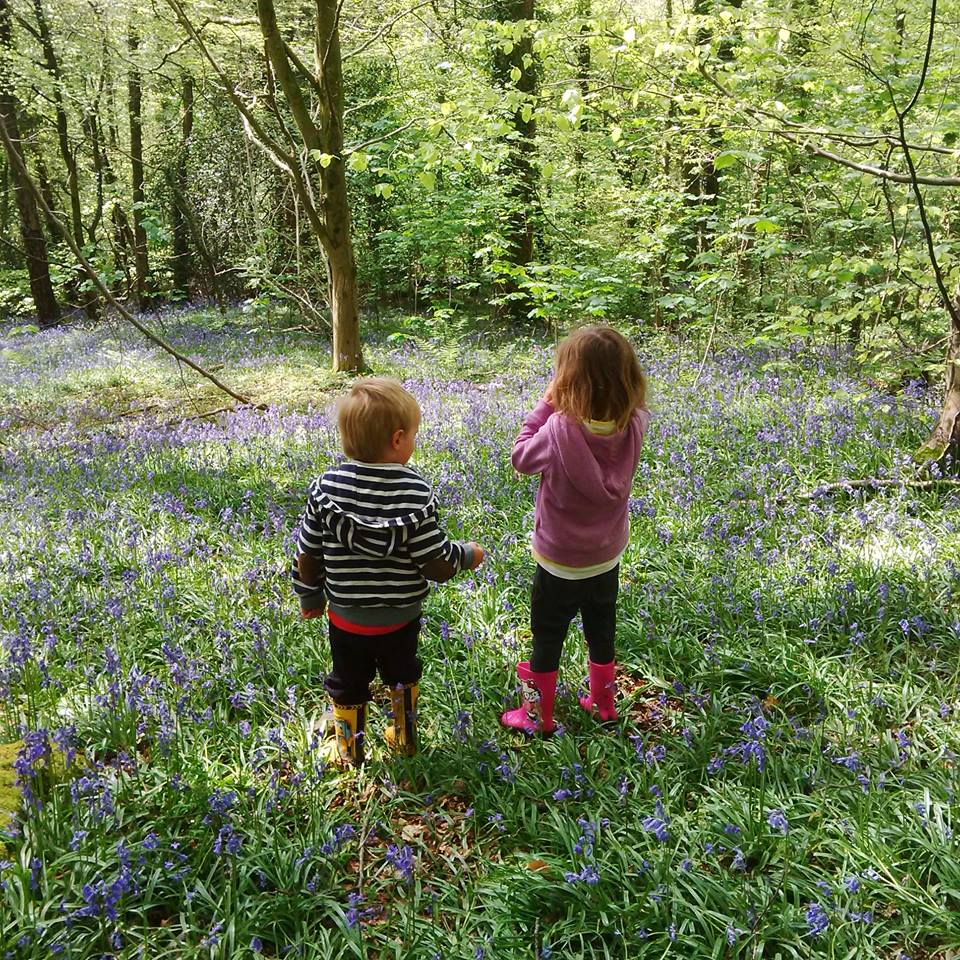 Bluebell woods, The Wenallt, Cardiff