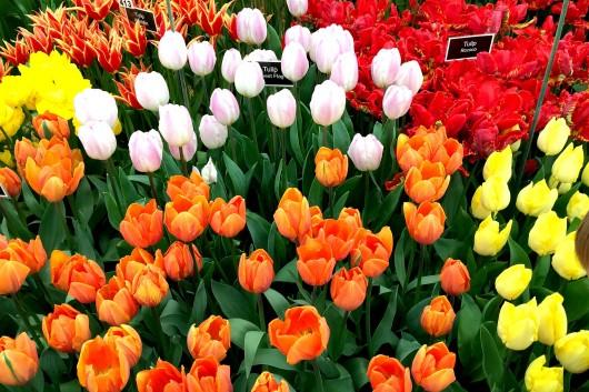 RHS Flower Show Cardiff