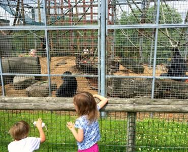 Monkey Sanctuary 10