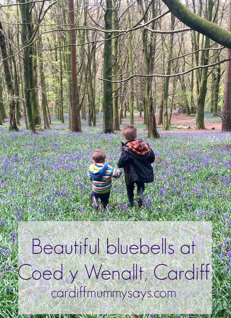 wenallt bluebells cardiff