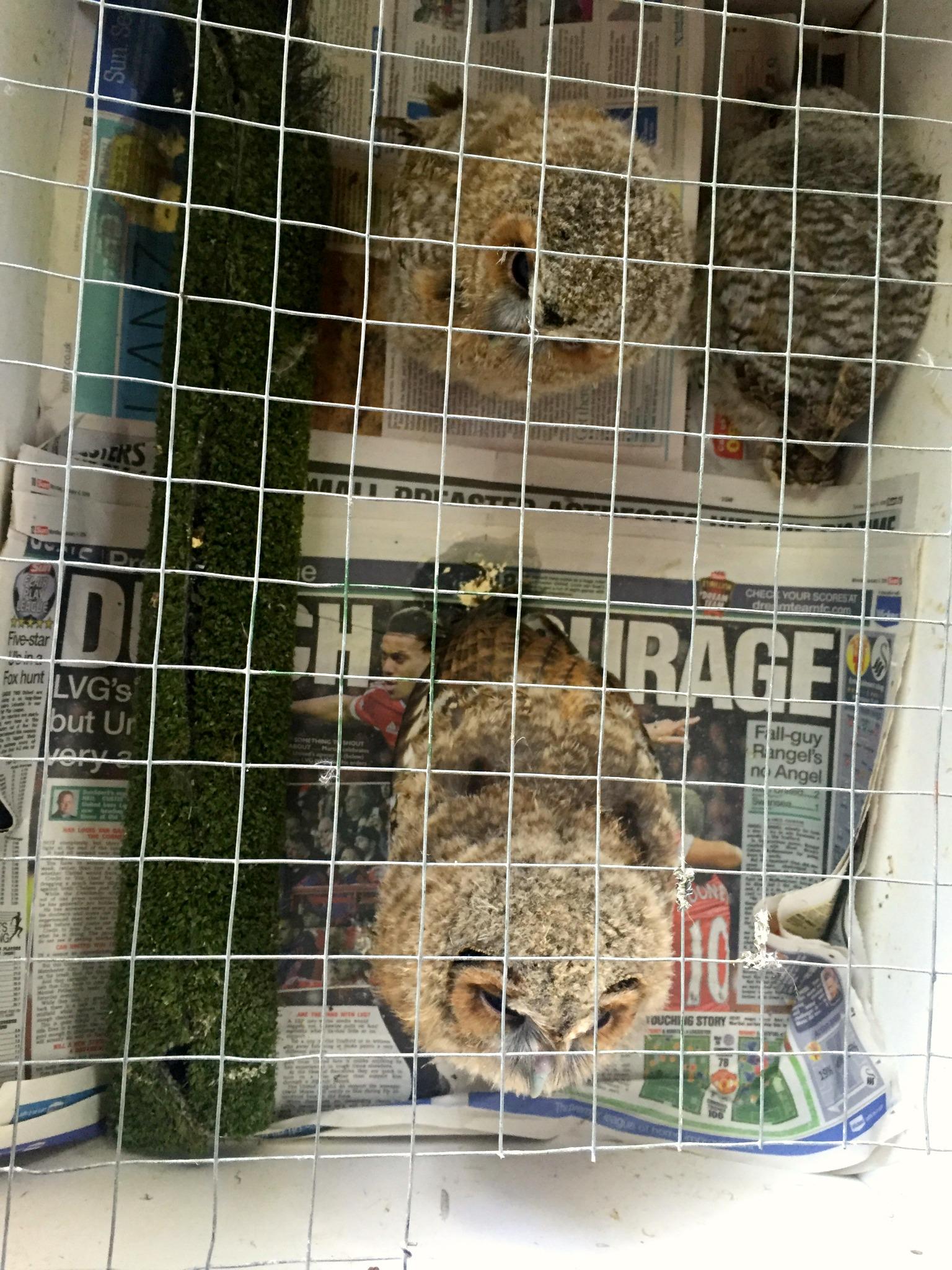 Ebbw Vale Owl Sanctuary 3