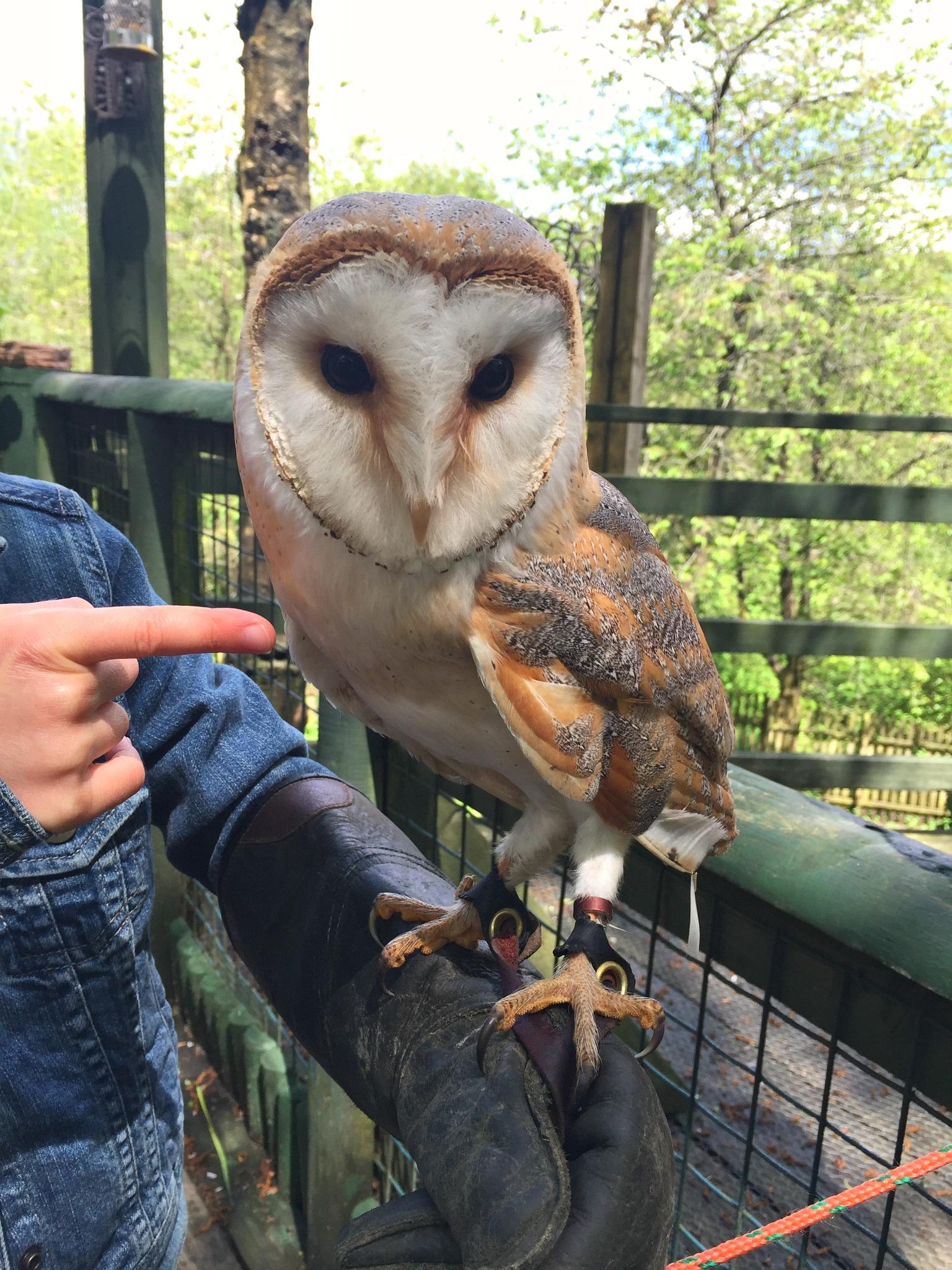 Ebbw Vale Owl Sanctuary