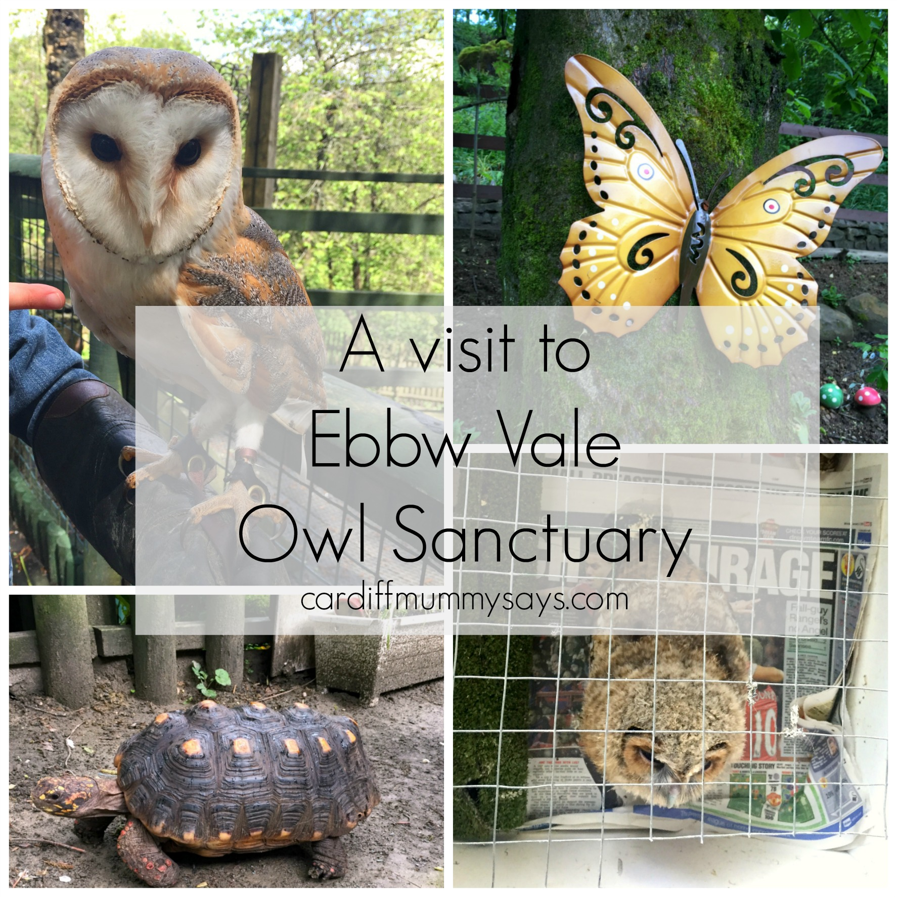 Ebbw Vale Owl Sanctuary Collage 2
