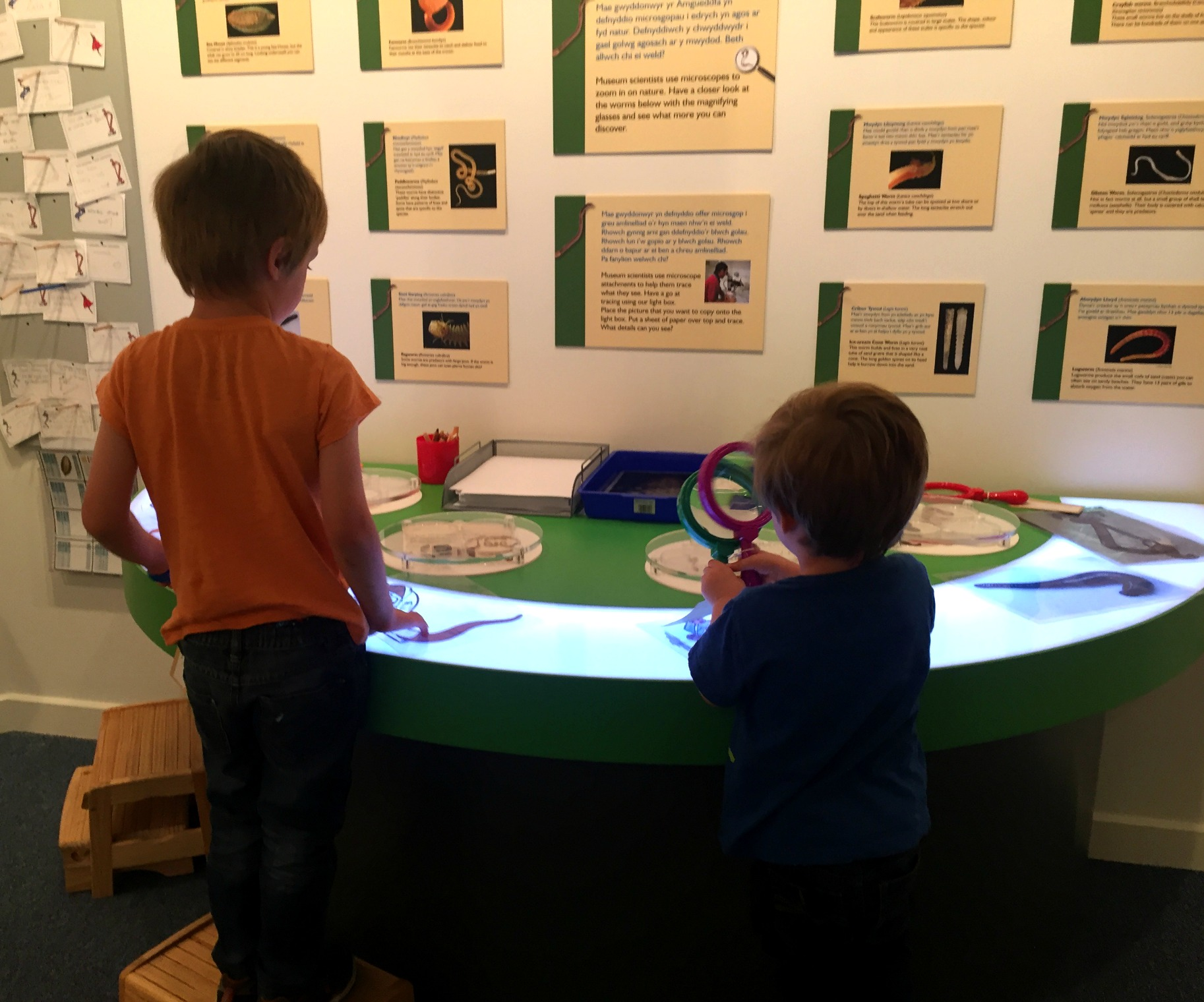 Wriggle National Museum Cardiff
