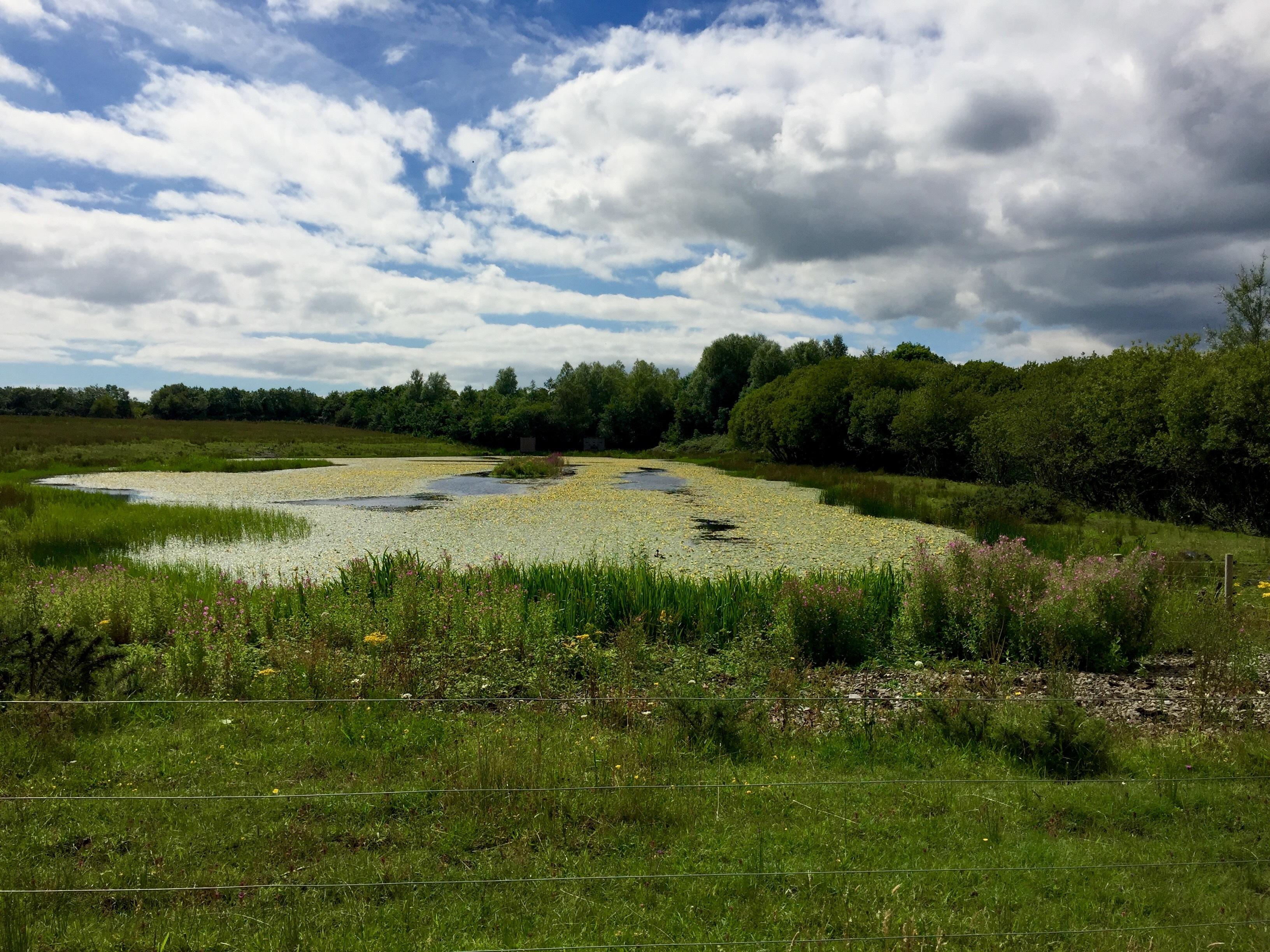 Parc Slip Nature Reserve