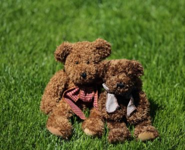 Two teddy bears in a field