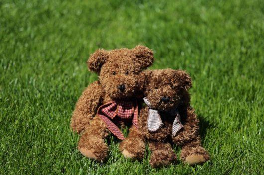 Two teddy bears in a field