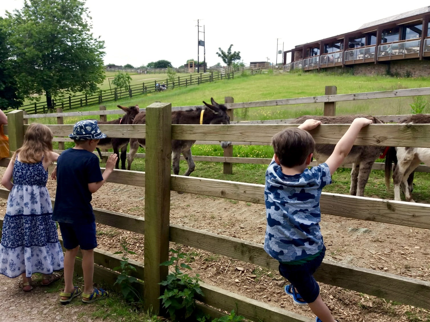 Donkey Sanctuary Sidmouth