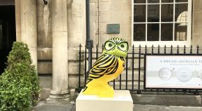 Owls of Bath