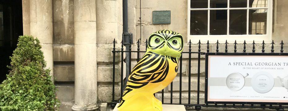 Owls of Bath