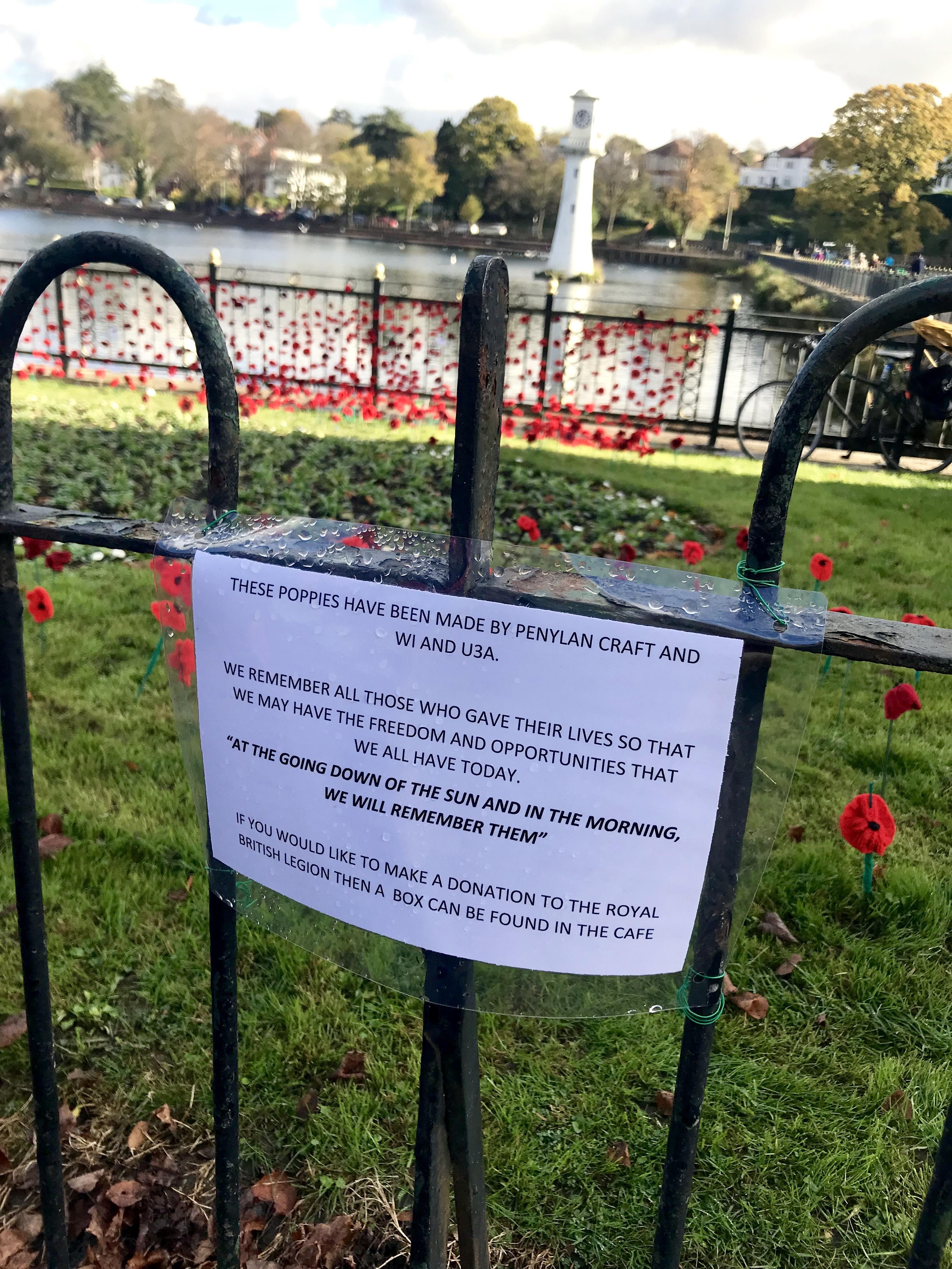 Roath Park poppies