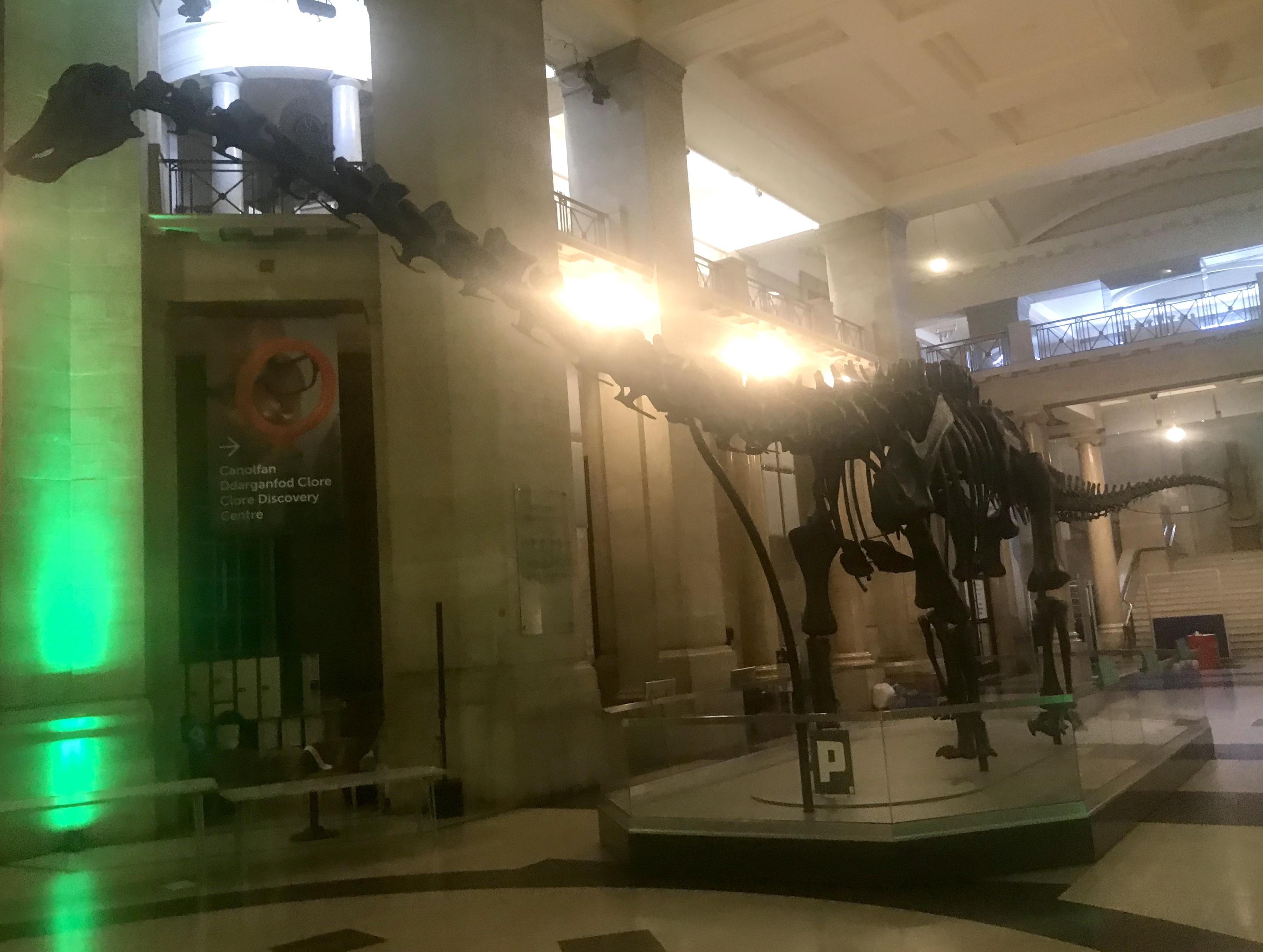 Museum Nights Dino Sleepover National Museum Cardiff