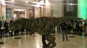 Museum Nights Sleepover Dinosaur Nights National Museum Cardiff