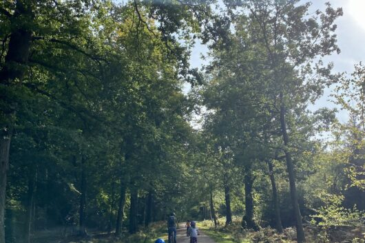 Beechenhurst family cycle trail